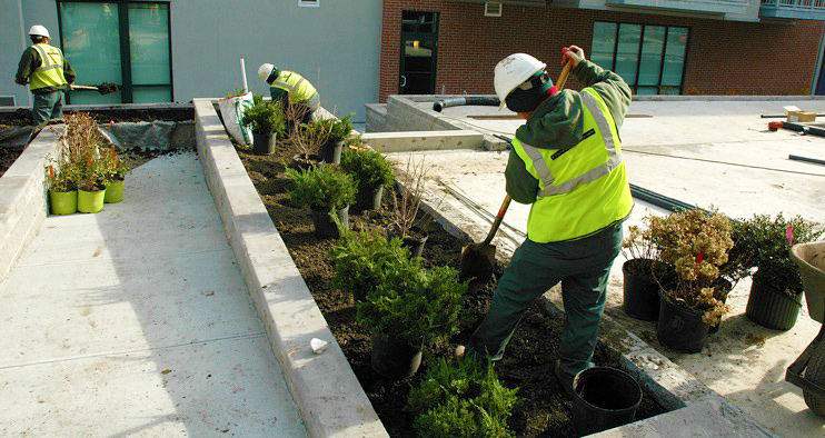 Planting Shrubs in Commercial Rooftop Garden, Connecticut